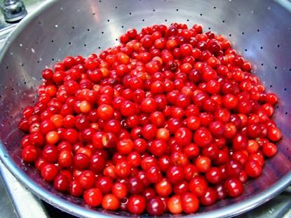 cherries-in-colander